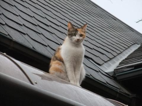 スモモ 屋根から