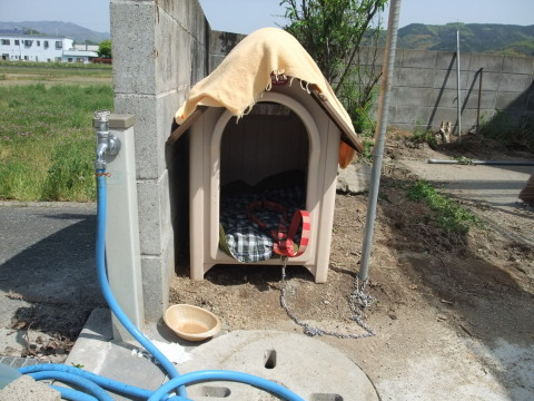 空の犬小屋