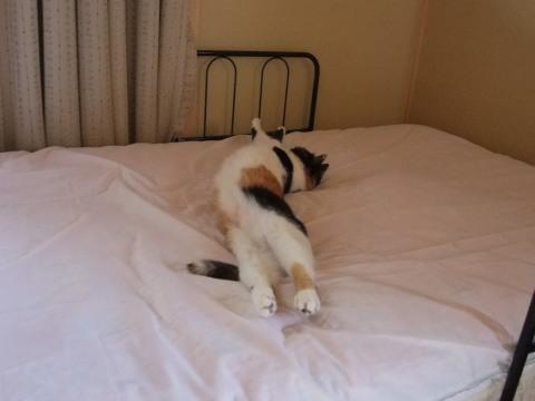 マリ ベッドで伸びる