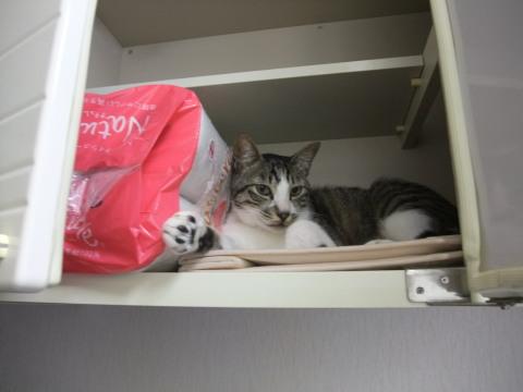 マメ つり戸棚の中