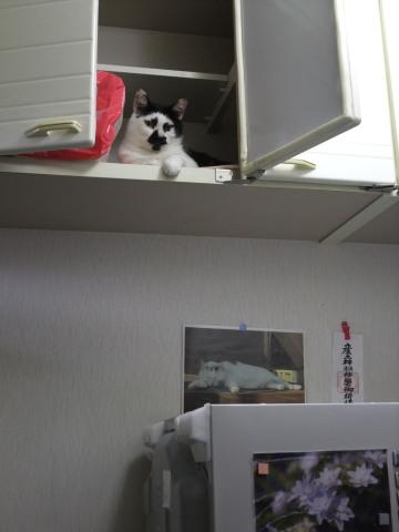 ミク つり戸棚の中