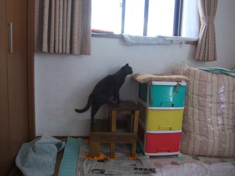トモ 出窓にあがる
