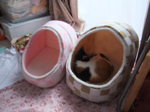 かまくら猫ベッド