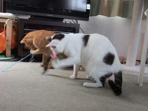 サトとイチ おもちゃで遊ぶ