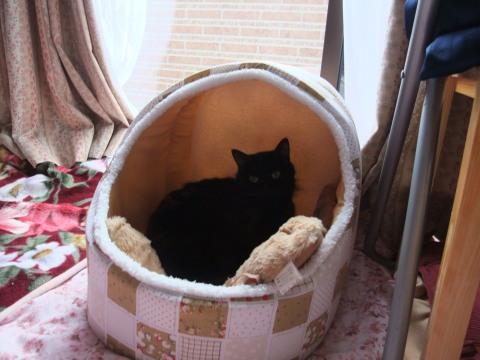 メイ 猫ベッド