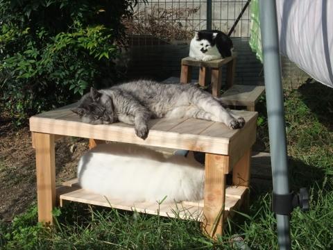 庭で寝るにゃんず