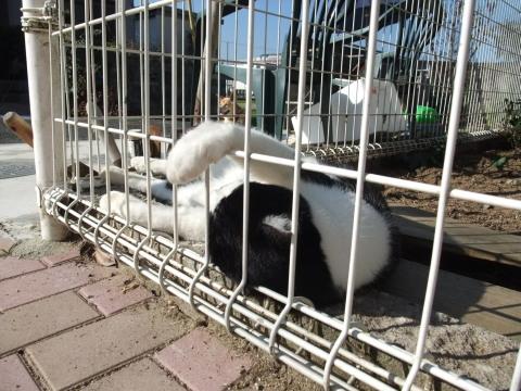 タク 庭で寝る2
