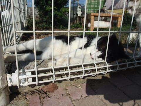 タク 庭で寝る