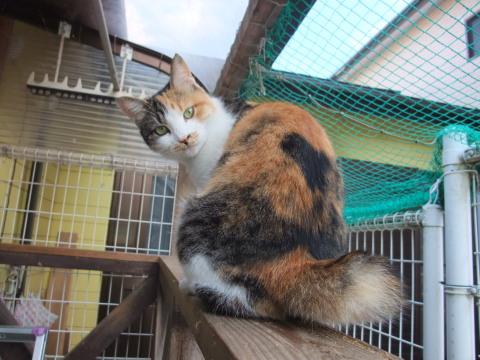 スモモ 見返り美猫?