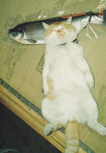 ポポロと鮭