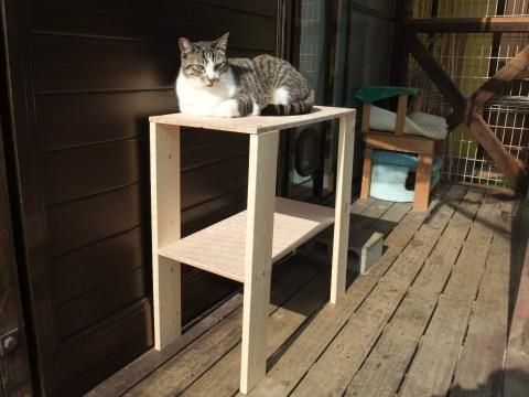 おニューの猫台