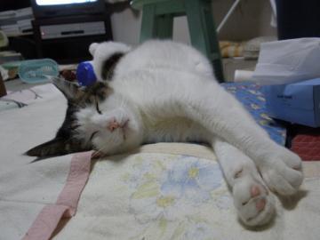 寝るハヤト。。。