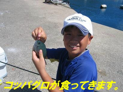 鷹島20100806_2