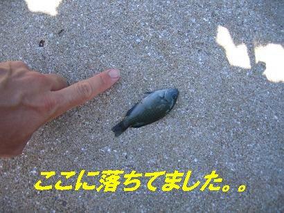 鷹島20100806_4