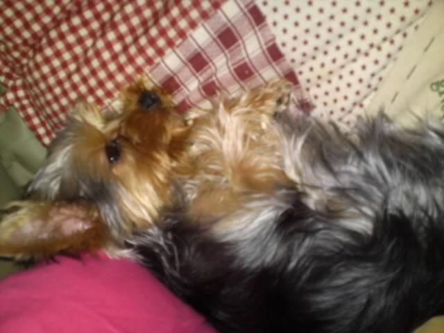 りゅうた 寝てる
