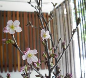 sakura2_convert_20120131235131.jpg