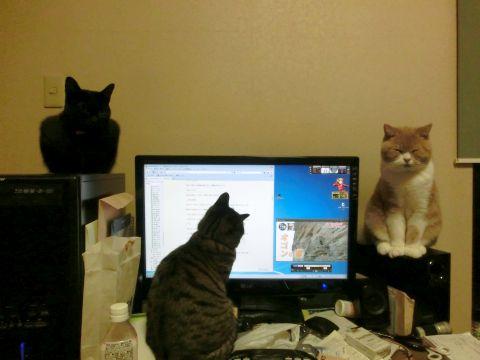 cat0005.jpg