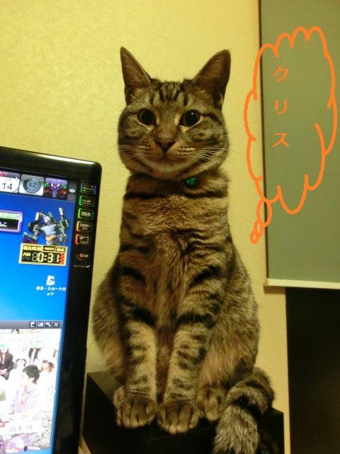 cat0007.jpg