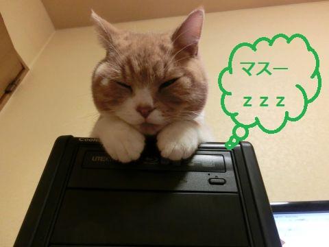 cat0010.jpg