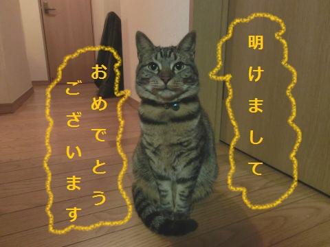 cat0011.jpg