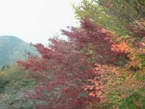 太平山紅葉3
