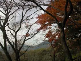 太平山紅葉