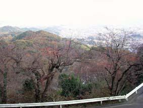 太平山紅葉4