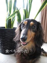 rokube20110624.jpg