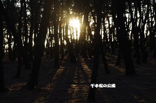IMGP4955.jpg