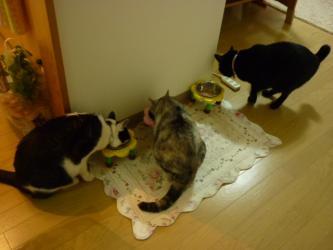 猫もディナーを