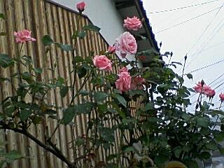 20080619134315.jpg