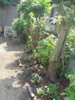 garden08043.jpg