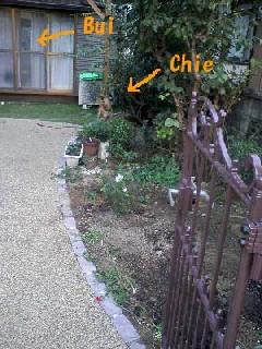 garden200910.jpg
