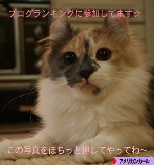 091025pochi.jpg