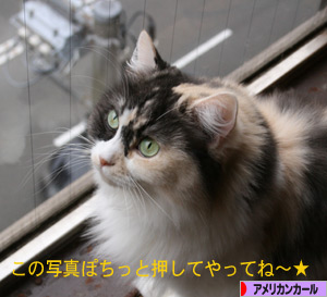 091210pochi.jpg