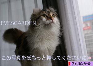 091211pochi.jpg