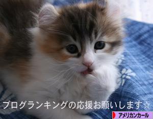 100531pochi.jpg