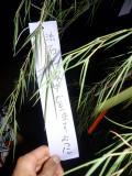 繝輔y繝ォ繝シ繧ソ繧ケ縺雁燕繧L・・y