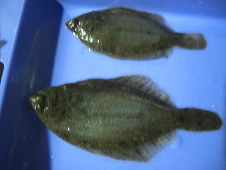 2009.10.2-4 4