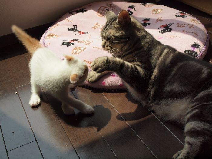 maiasano nikka20110607(5)