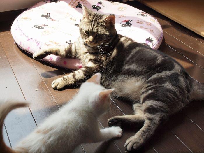 maiasano nikka20110607(4)