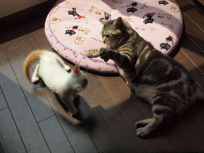 maiasano nikka20110607(8)