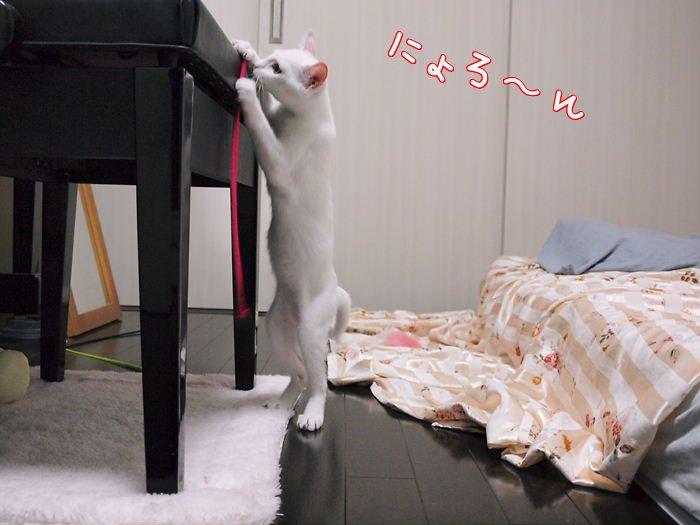 daisykaihikaku20110613 (2)