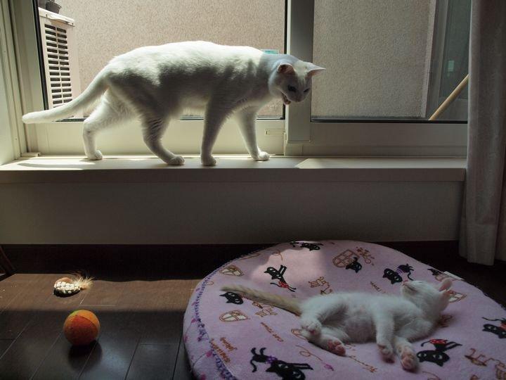 daisykaianohi20110616 (2)