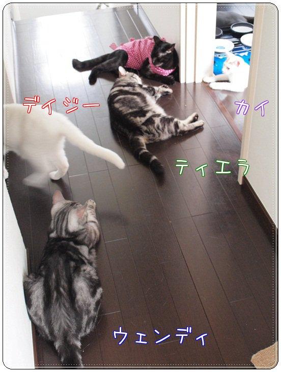 minnaissho20110719 (4)