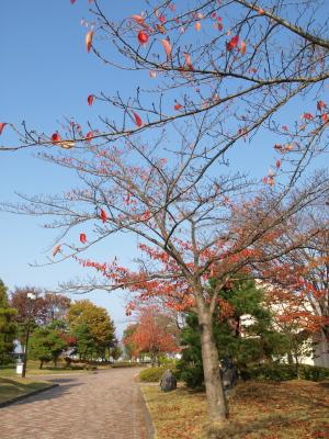 秋の運動公園