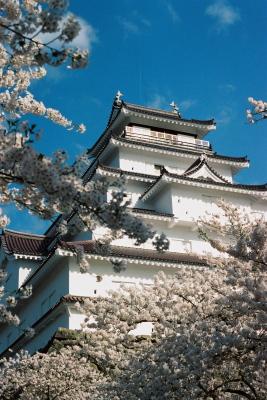 鶴ヶ城天守閣と桜_2011/04/25