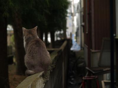 境内にいた猫ちゃん