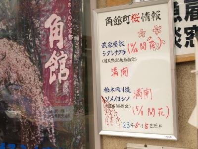2011年5月5日の桜開花情報(桧木内川堤と武家屋敷)