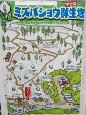 田沢湖刺巻湿原ミズバショウ群生地